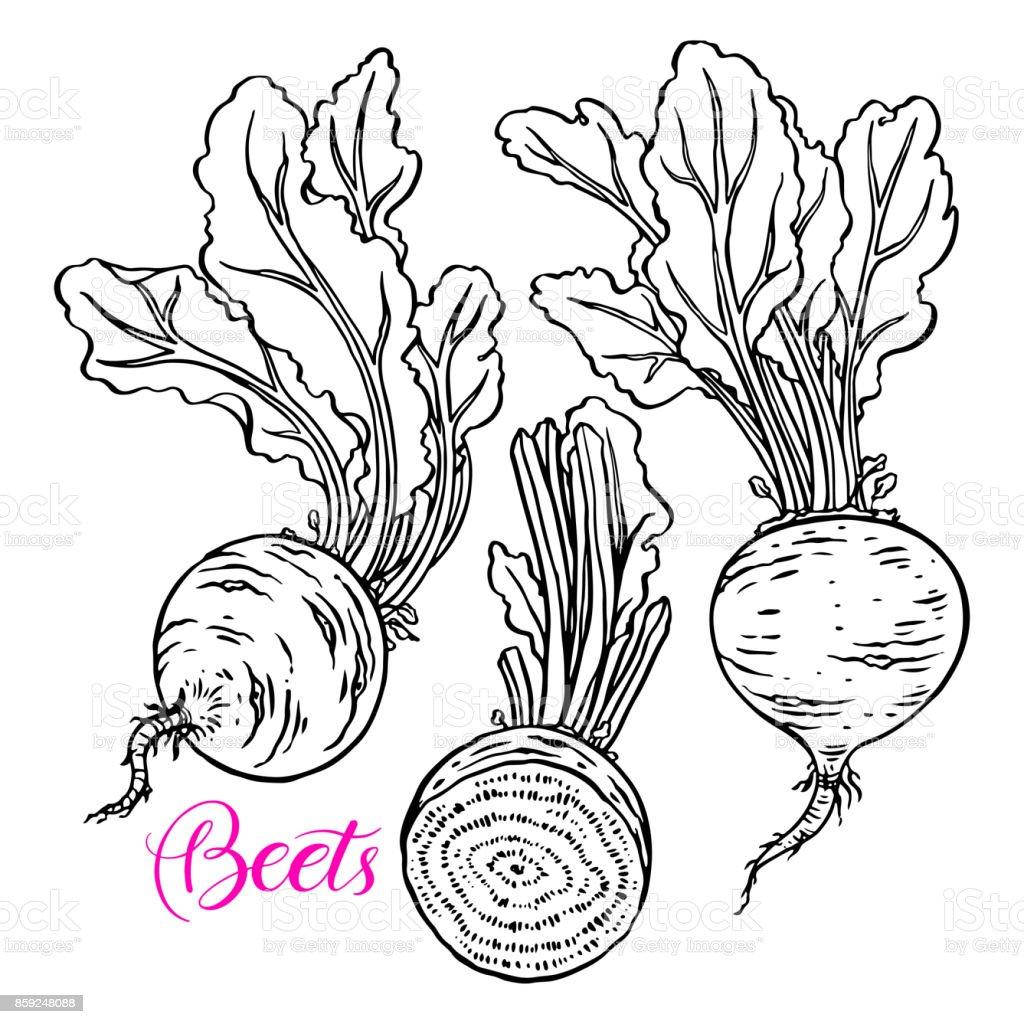 Set of ripe beets vector art illustration