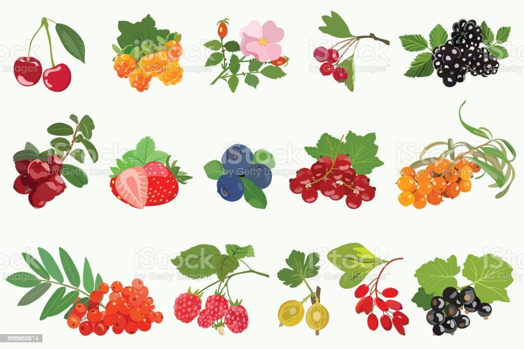Set of ripe berries with leaves on white background. Vector vector art illustration