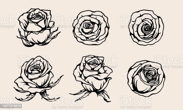 Set of rose ornament vector by hand drawing vector id1077019474?b=1&k=6&m=1077019474&s=612x612&h=rwdsjxo61rlestdky8ari8edpy l0jker6 hpjsmzka=
