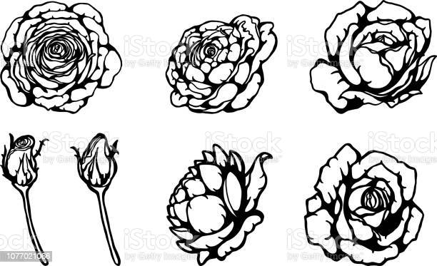 Set of rose ornament vector by hand drawing vector id1077021066?b=1&k=6&m=1077021066&s=612x612&h=83vo11s5n9kqkbuvkrakphocelhfvousuhfuhugukn4=