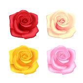 Set of roses on white background, red, beige, pink and yellow, garden flowers. Objects for decoration.