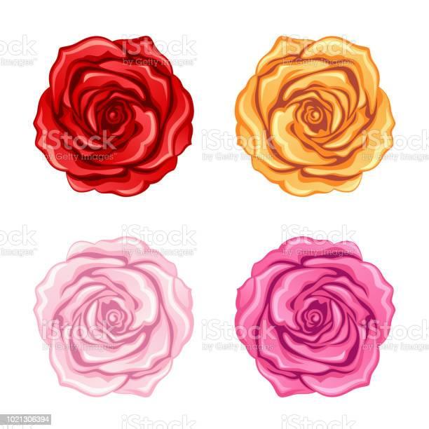 Set of roses vector id1021306394?b=1&k=6&m=1021306394&s=612x612&h=ftzak5dmvkvqegvssylu3kxxuhhgjc6uk3ahcsrkpuu=