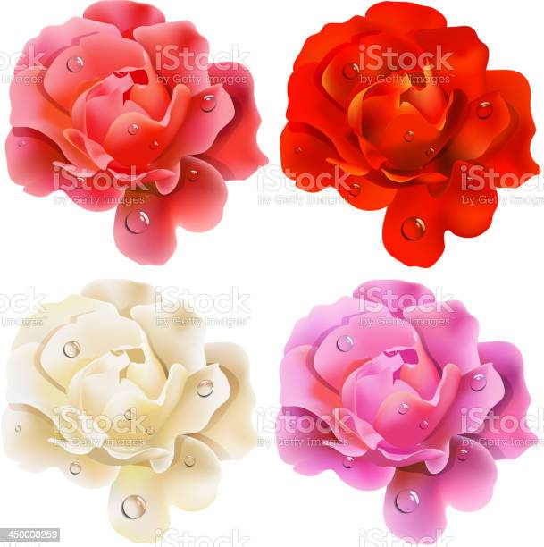 Set of roses vector id450008259?b=1&k=6&m=450008259&s=612x612&h= hxzkp qguuueqhekf3rkzzdc3v83qvrrfbk buhqcq=