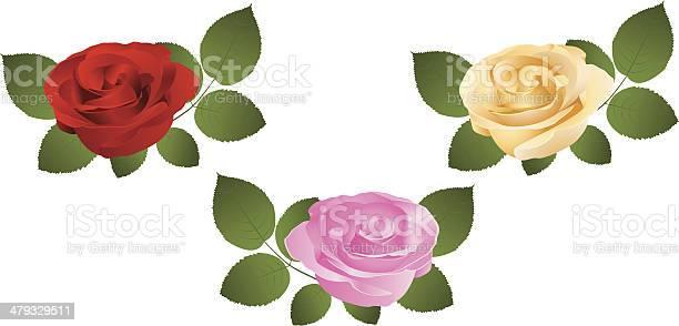 Set of roses vector id479329511?b=1&k=6&m=479329511&s=612x612&h=nxt1kasitbuhonwxufukkghhwhofdaqvikt9f92zh68=
