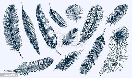 Set of Rustic realistic feathers of different birds, owls, peacocks, ducks. engraved hand drawn in old vintage sketch. Vector illustration