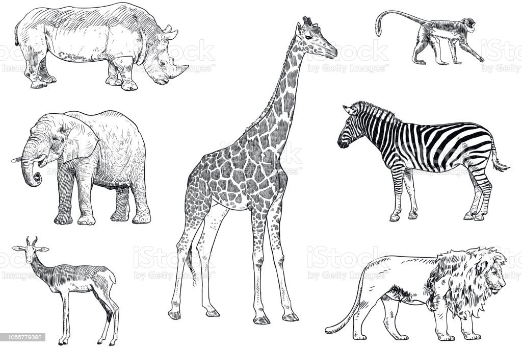 Set Of Safari Animals Vector Drawings Monkey Rhino Elephant Impala
