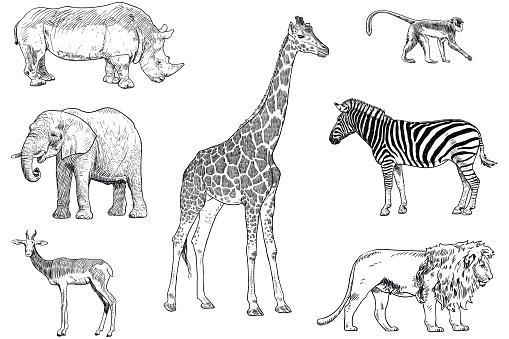Set of safari animals vector drawings. Monkey, rhino, elephant, impala, giraffe, zebra and lion