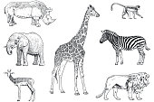 istock Set of safari animals vector drawings. Monkey, rhino, elephant, impala, giraffe, zebra and lion 1065779392