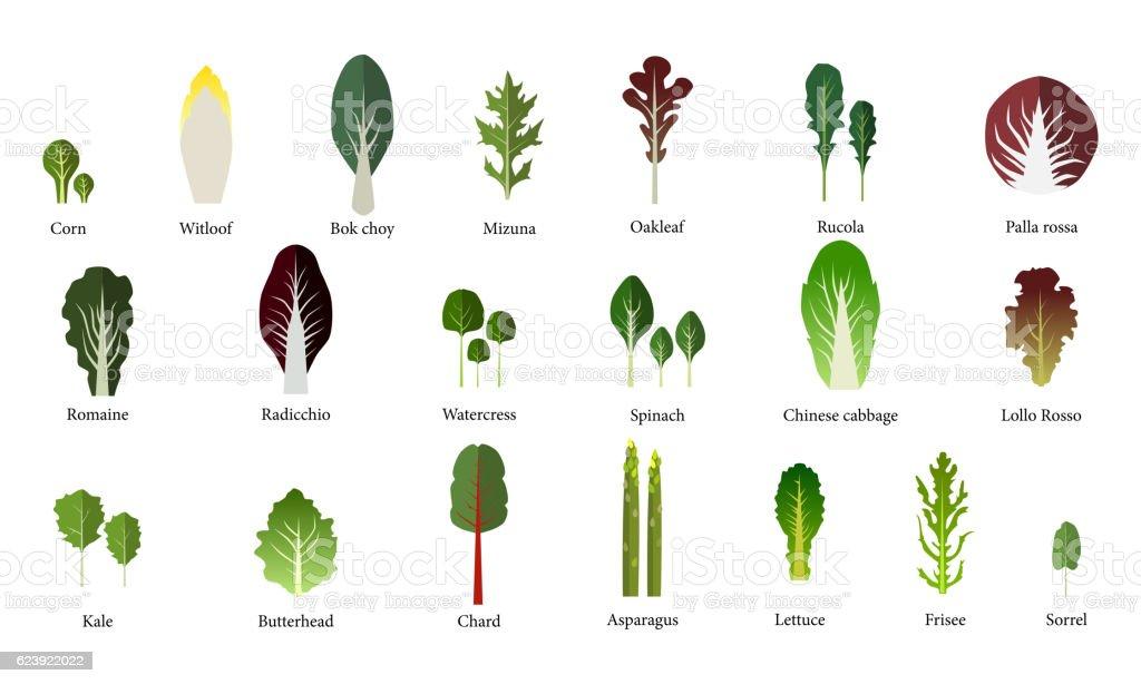 Set of salad bowl. Leafy vegetables green. Vector - ilustração de arte em vetor