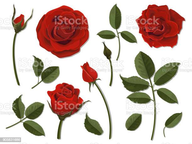 Set of scarlet rose flower parts vector id905831686?b=1&k=6&m=905831686&s=612x612&h=fm3rjqpbvouyelke8s1m1tfifm xbbxsnsb srna2bm=