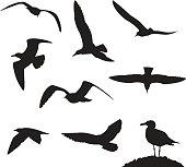 Set of sea gulls isolated on white background