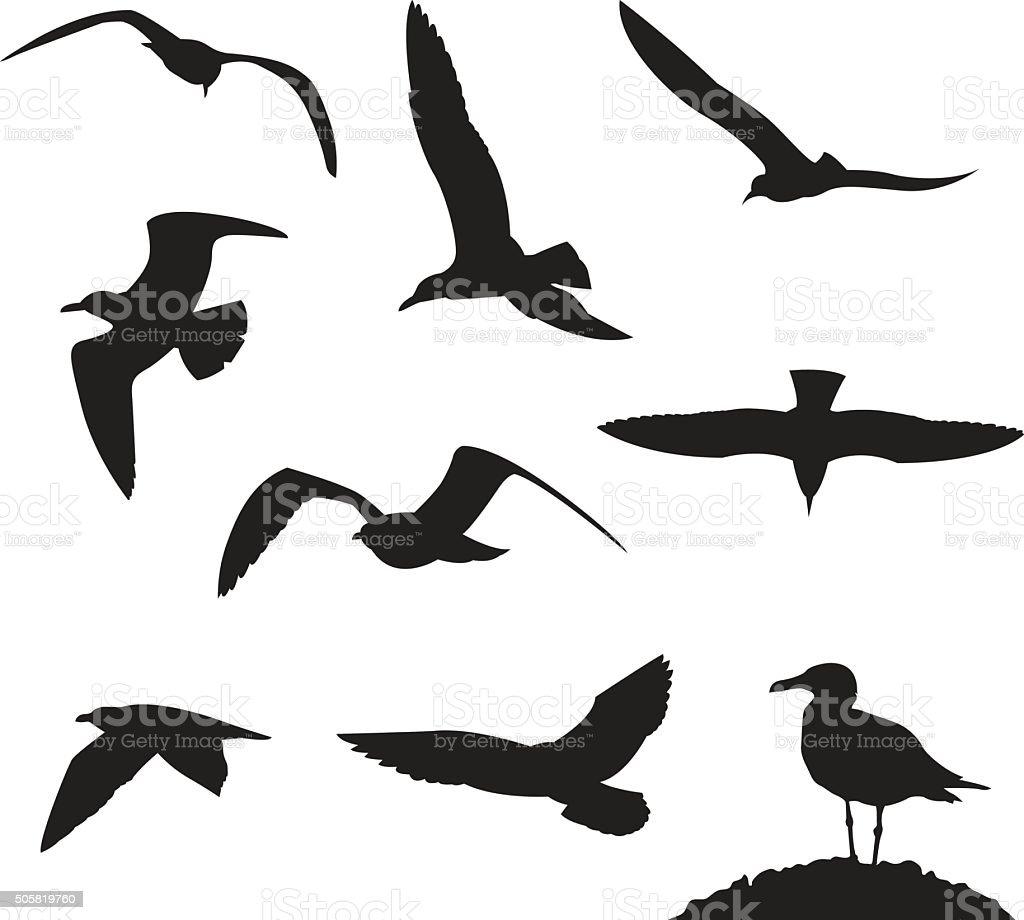 Set of sea gulls isolated on white background vector art illustration
