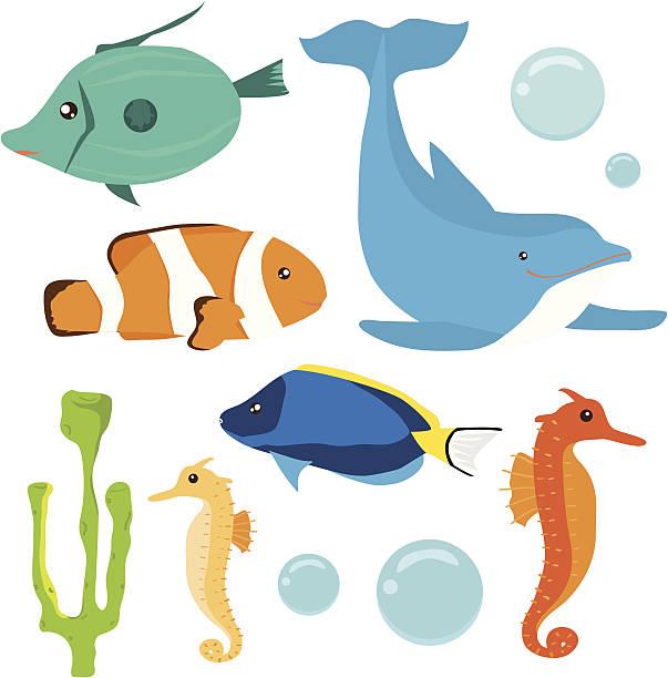 satz von meer-leben, fisch - petersfisch stock-grafiken, -clipart, -cartoons und -symbole
