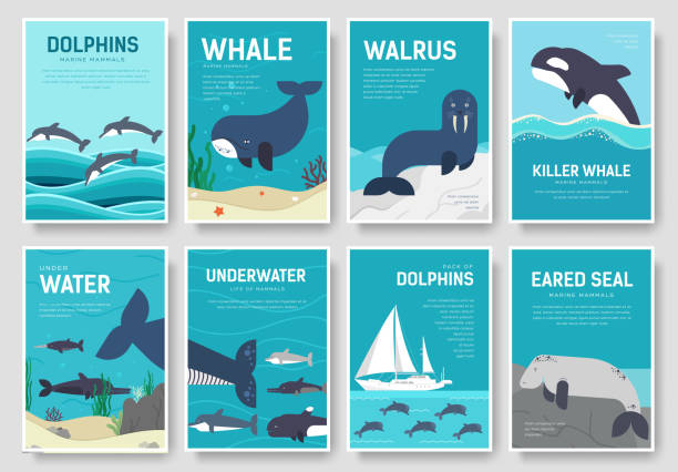 set of sea mammals pattern concept. art animal, magazine, book, poster, abstract, banners, element. vector fish in ocean life package greeting card or invitation brochure design. - dolphin stock illustrations