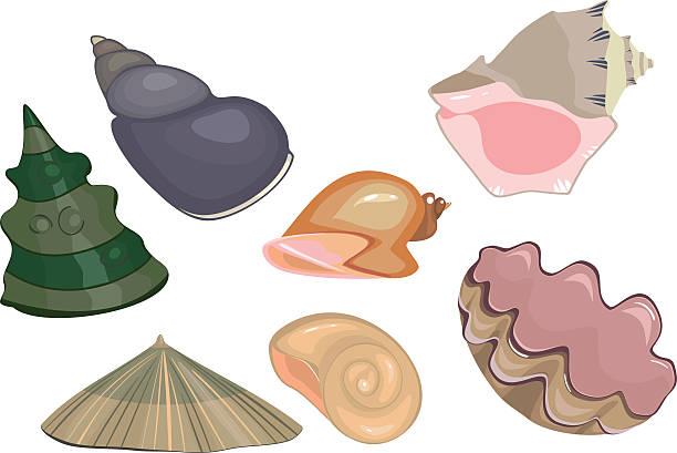 ilustrações de stock, clip art, desenhos animados e ícones de conjunto de mar conchas - lapa