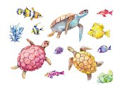 Set of sea turtles, marine fish and algae watercolor