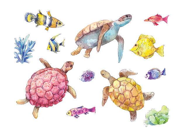 set of sea turtles, marine fish and algae watercolor - turtle stock illustrations