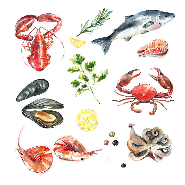 Set of seafood watercolor. Watercolor set of seafood.Hand draw isolated illustration on white background:lobster,crab,shrimp,octopus,mussel,salmon with herbs,lemon and peppers.Fresh organic food. seafood stock illustrations