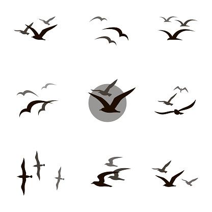set of seagulls