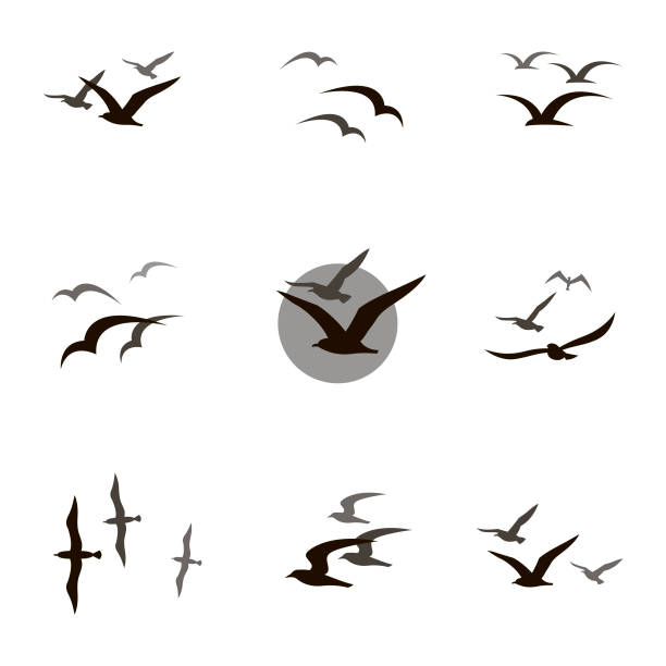 set of seagulls - birds stock illustrations