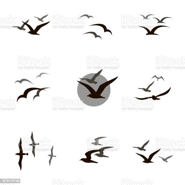 collection of black flying seagull silhouettes on white background