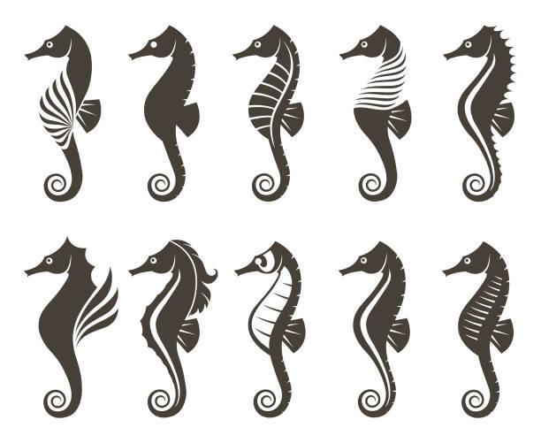 Vectores de Caballito De Mar y Illustraciones Libre de Derechos - iStock