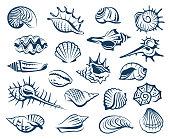 set of seashells