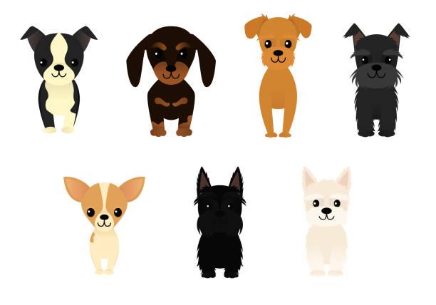 Set of seven happy dogs vector art illustration