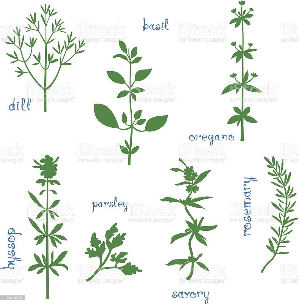 Set of seven illustrations of aromatic herbs vector art illustration