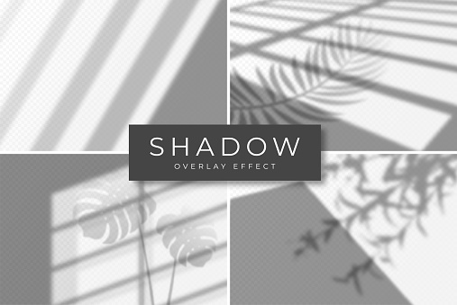 Set of shadow overlay effects. Vector shadow and light overlay effect, natural lighting scene. Mockup of transparent shadow from window, monstera leaves and plants