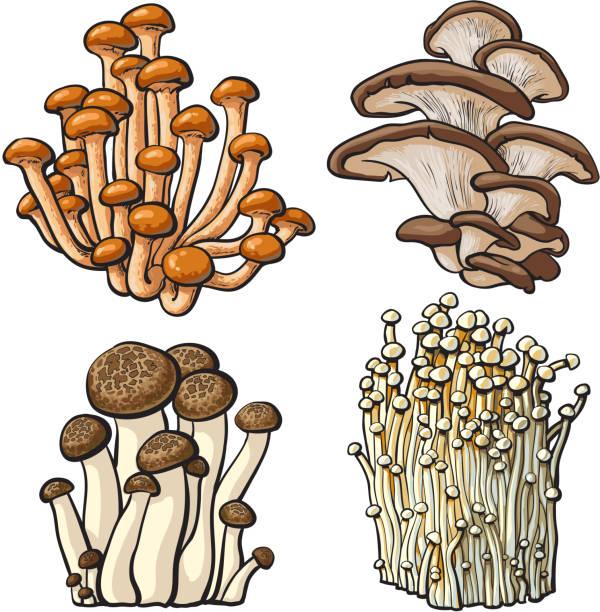 set of shimeji, oyster, enokitake and king trumpet edible mushrooms - しめじ点のイラスト素材/クリップアート素材/マンガ素材/アイコン素材