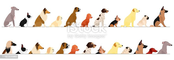 set of  side view  small and large dogs border