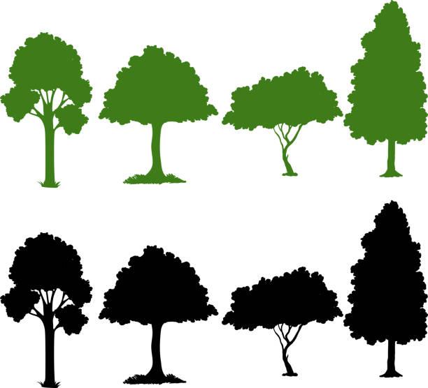 ilustraciones, imágenes clip art, dibujos animados e iconos de stock de sistema de la planta de silueta - árbol