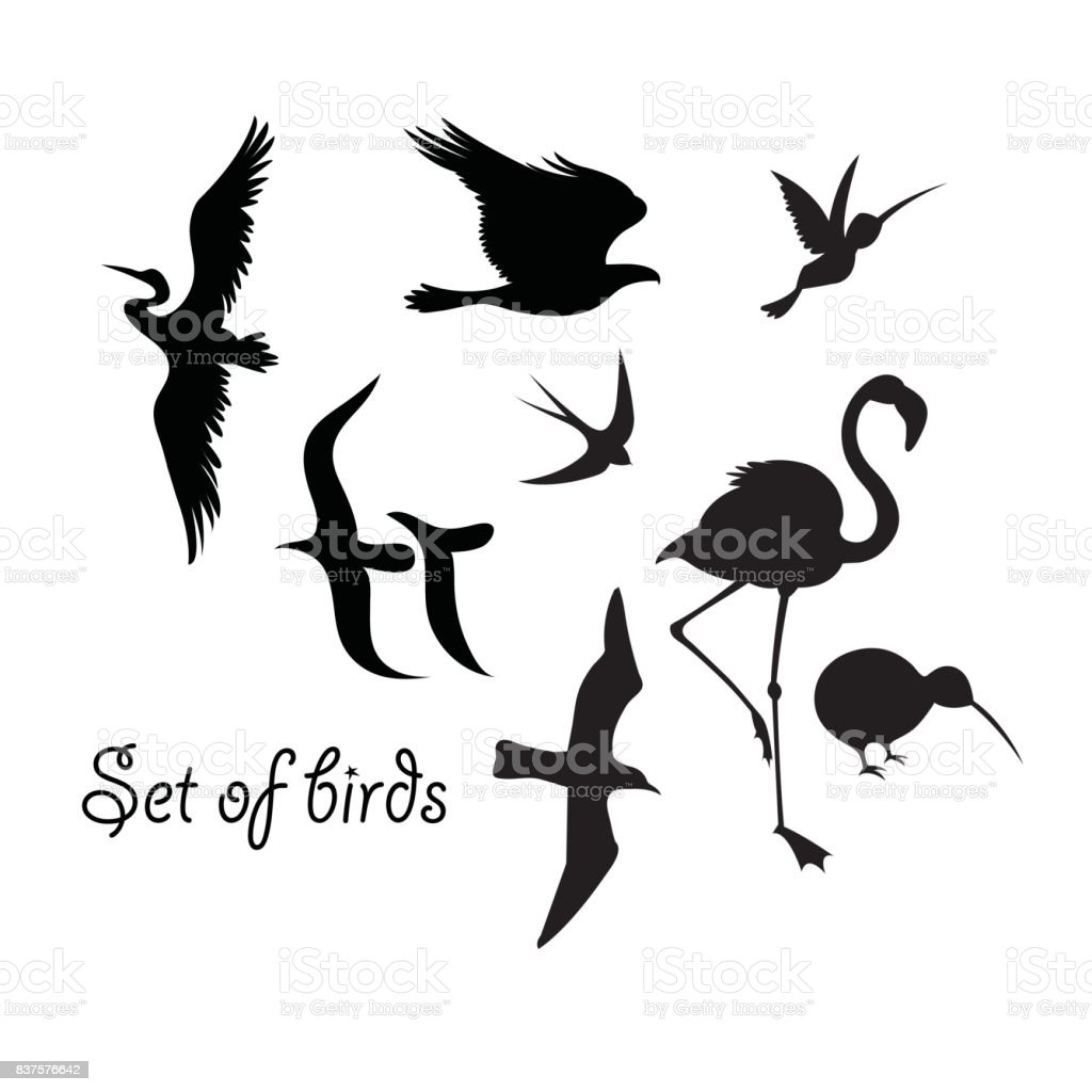 Set of silhouettes of birds symbols stock vector art more images set of silhouettes of birds symbols royalty free set of silhouettes of birds symbols stock buycottarizona Choice Image