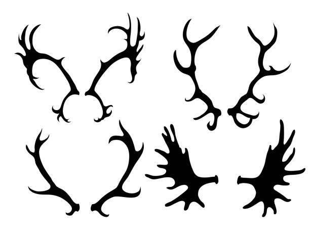 Set of silhouettes of deer and elk horns Set of silhouettes of deer and elk horns. Vector element for your creativity elk stock illustrations