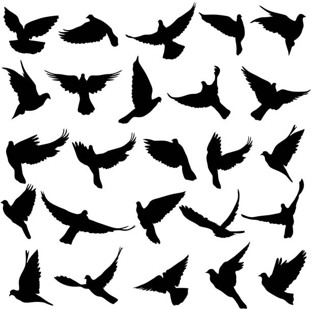 Set of silhouettes of doves. Concept of love or peace. Set of silhouettes of doves. Vector illustration. pigeon stock illustrations
