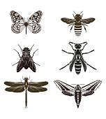 Set of silhouettes of flying insects. Vector illustration.