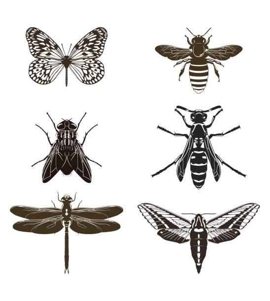 Set of silhouettes of flying insects. Vector illustration. Vector set of butterfly silhouettes, fly, bee, wasp, dragonfly and moth isolated on white background. Insects. fly insect stock illustrations