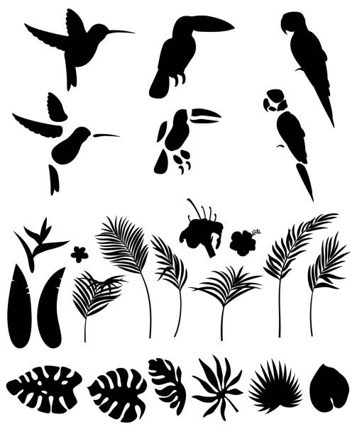 Set of silhouettes of palm leaves and other tropical plants and flowers and tropical birds isolated on white background for animation vector art illustration