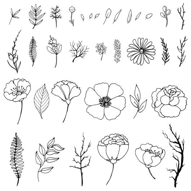 set of simple doodles of flowers and twigs - gałązka stock illustrations