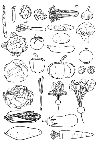 Set of simple drawings of vegetables good for coloring books