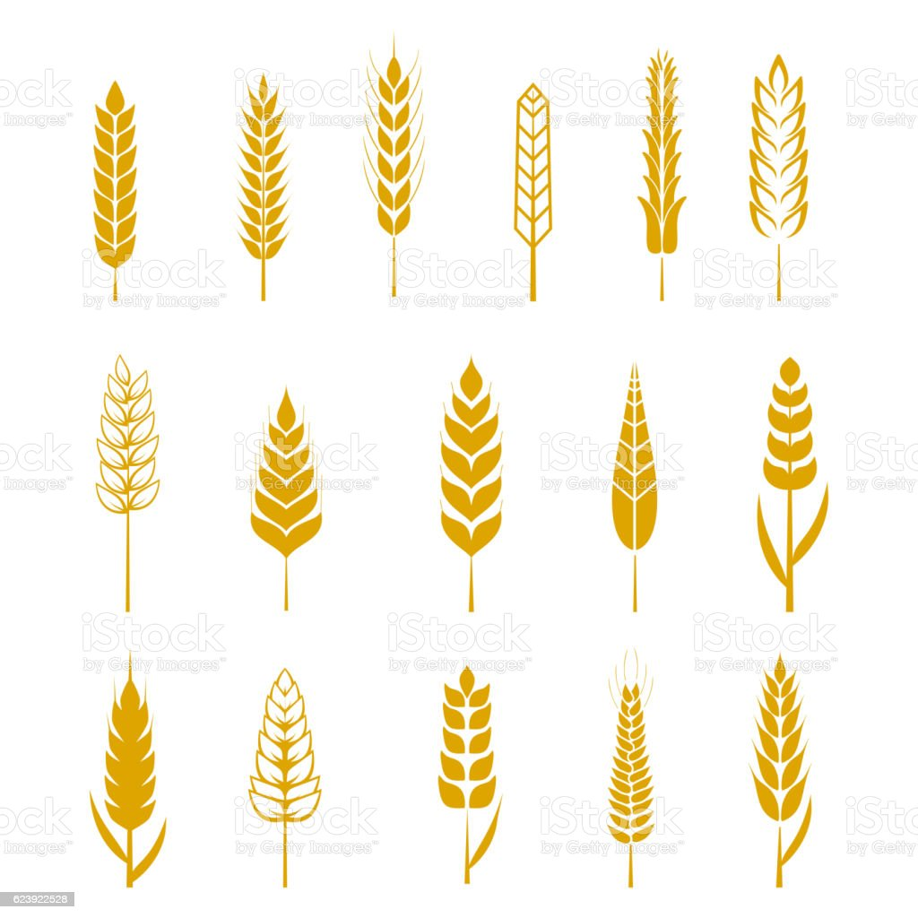 Set of simple wheat ears icons and design elements for vector art illustration