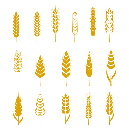 Set Of Simple Wheat Ears Icons And Design Elements For Stock Vektor Art und mehr Bilder von Abschirmen