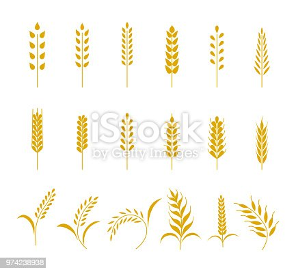 Set of simple wheats ears icons and grain design elements for beer, organic wheats local farm fresh food, bakery themed wheat design, grain, beer elements. Vector illustration eps10.