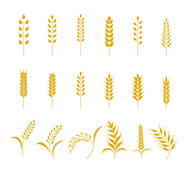 Set of simple wheats ears icons and grain design elements for beer, organic wheats local farm fresh food, bakery themed wheat design, grain, beer elements. Vector illustration eps10 Set of simple wheats ears icons and grain design elements for beer, organic wheats local farm fresh food, bakery themed wheat design, grain, beer elements. Vector illustration eps10. bread patterns stock illustrations