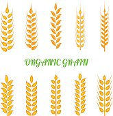 Set of simple wheats ears icons and wheat design elements for beer, organic wheats local farm fresh food, bakery themed wheat design, grain, beer elements, wheat simple. Vector set.
