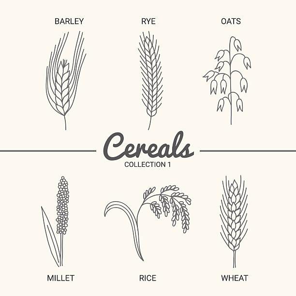 ilustrações de stock, clip art, desenhos animados e ícones de conjunto de seis cereais - ilustrações de oats