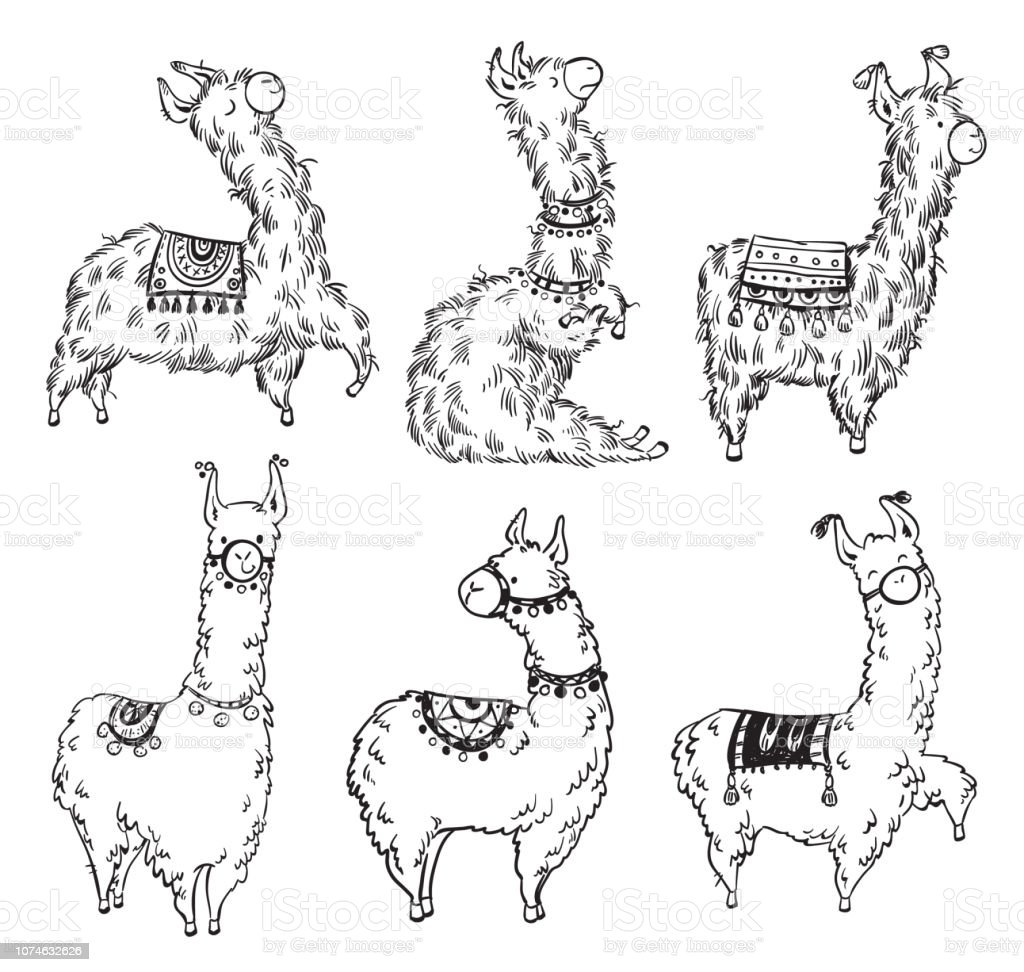 Set of six pretty hand drawn lamas, vector illustration vector art illustration