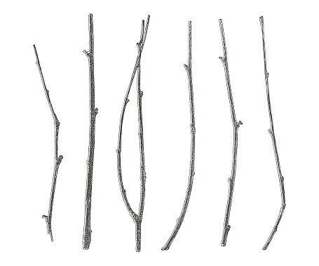 Set of six twigs cut out on white background