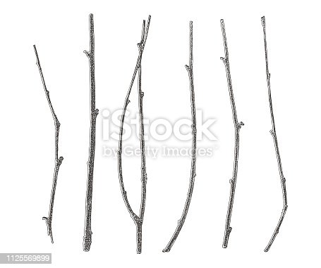 engraving Set of six twigs cut out on white background